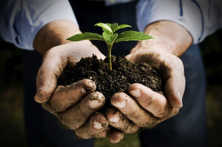 Agricoltura biodinamica come filosofia di vita e di lavoro #biodinamica #agricoltura