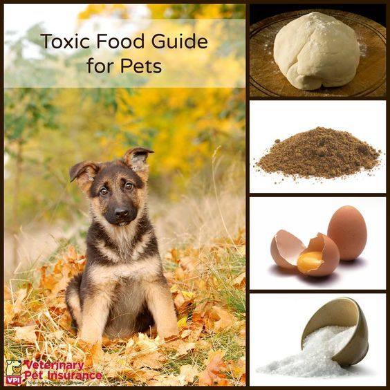Toxic Food Guide