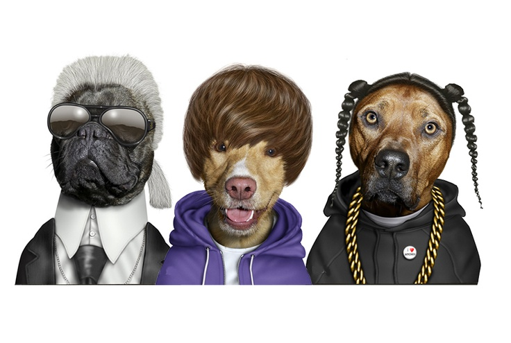If It's Hip, It's Here: Pets Rock. Takkoda's Cast of Characters and New Calendars for 2013.