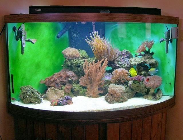 Best 25 saltwater aquarium setup ideas on pinterest for Fish tank setup ideas
