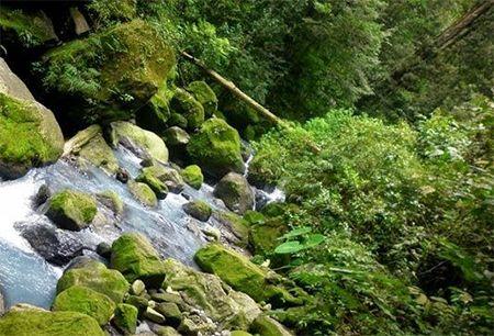 Cagar Alam Sibolangit Sumatera Utara