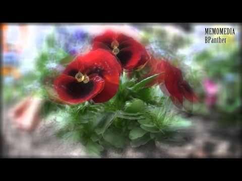 Сборник классической музыки для концентрации на учёбе Шопен, Вивальди, Бах, Шуберт и т д classical - YouTube