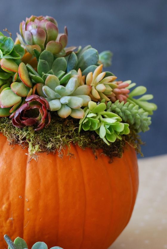 These fall floral arrangements using pumpkins and gourds as vases will make you want to throw a party just so you can create one of these fall beauties.