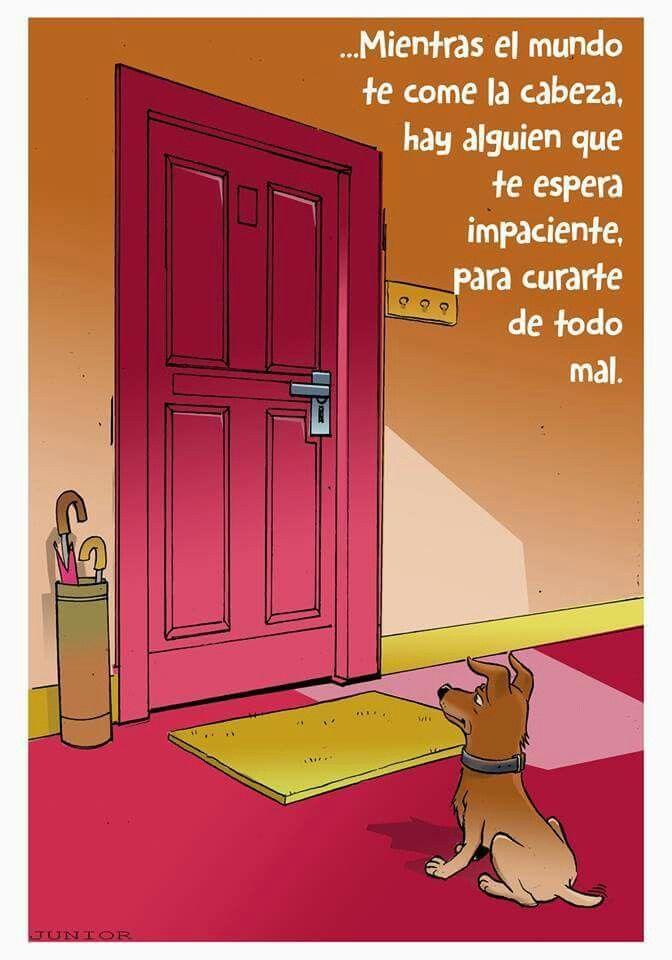 Animales #perros                                                                                                                                                      Más