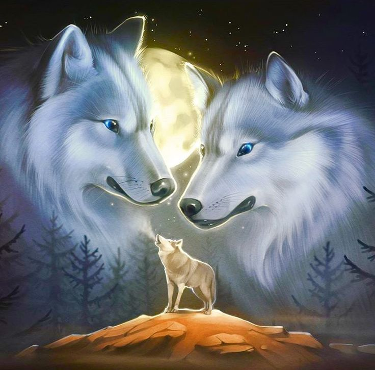 Wolves: A Pair of Wolves  Art Image.