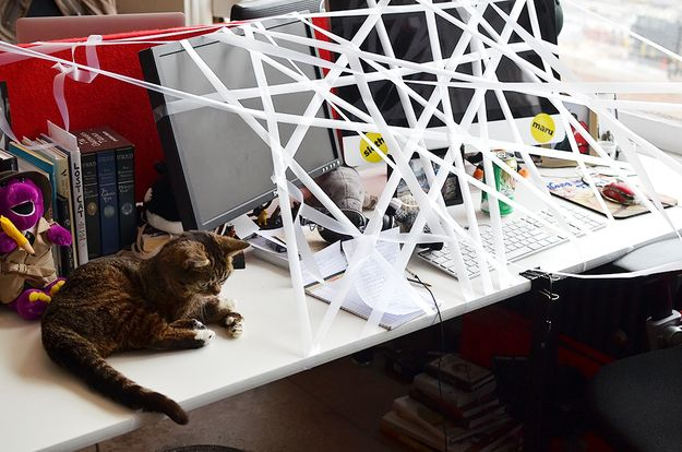 Tip 1: When your coworker goes to the restroom, tape everything on his desk together. This is called spiderwebbing ... | 15 Tips To Improve Your Day At The Office (With LilBUB!)