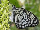 10 cool facts about butterflies
