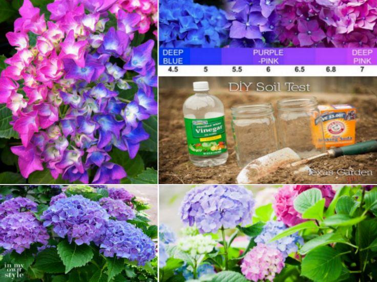 17 Best Ideas About Hydrangea Plant On Pinterest Growing