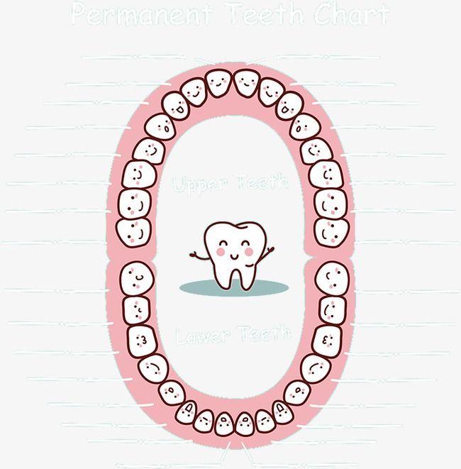 Картинка для отмечания зубов