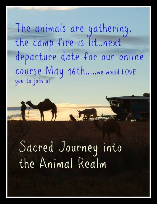Lots of videos and magical audio stories and meditations on our online course Book now http://yourcreativewitchery.com/sacredjourney If you would like to help us help the animals  PLEASE click on SHARE..thank youxxx