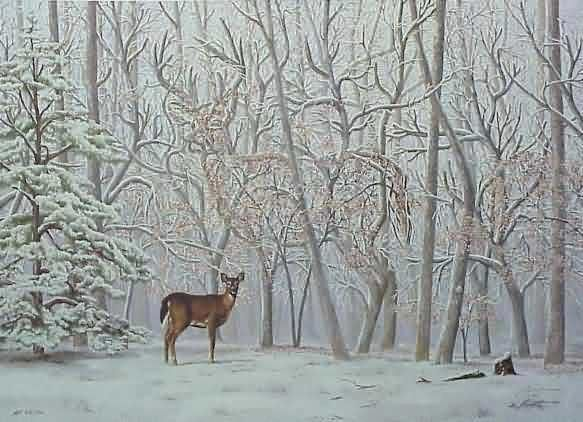 Can you find the 2nd deer if so repin it7 Illusions, Illusions Pictures, Art, Winter Wonderland, Hidden Pictures, 2Nd Deer, Cool Optical Illusions, Second Deer, Animal