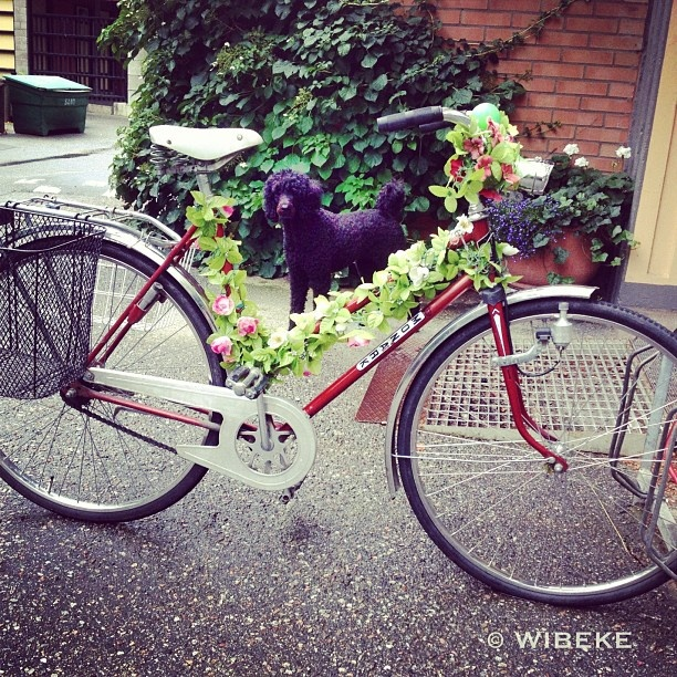 Found this lovely decorated bike outside my front door. Silk flowers all over  http://www.russwholesaleflowers.com/best-silk-wholesale-flowers  Russ Wholesale Flowers offers silk flower arrangements, silk flowers bulk, silk wedding flowers, silk flowers wholesale, silk orchids, silk roses...and more.  In addition we carry a large selection of real touch and natural touch flowers.