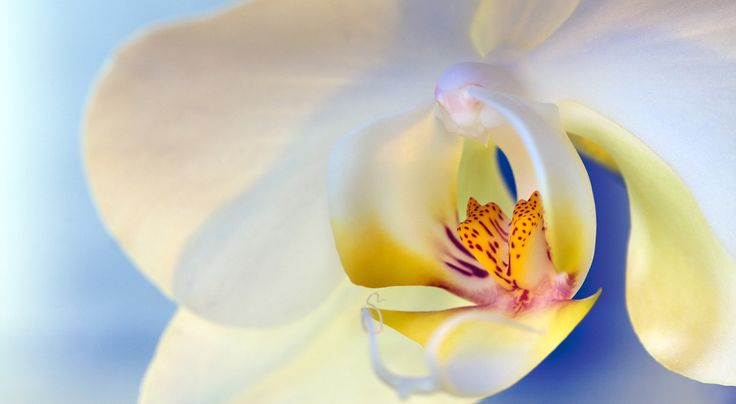 Using a simple reflector and a flashlight or two you can make stunning flower images right at home if you follow these tips.