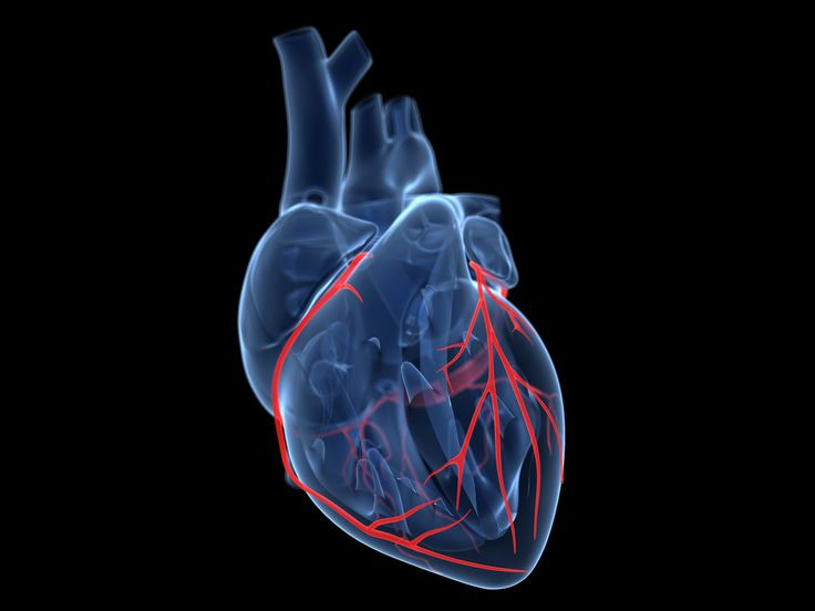Google Aims a $50 Million Moonshot at Curing Heart Disease