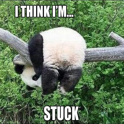 #panda meme I think Im stuck