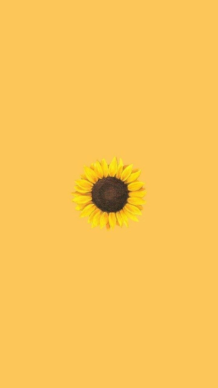 Yellow Sunflower Sunflower Wallpaper Iphone Wallpaper Yellow Yellow Wallpaper