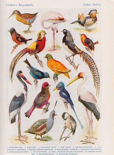 Lovely vintage birds...