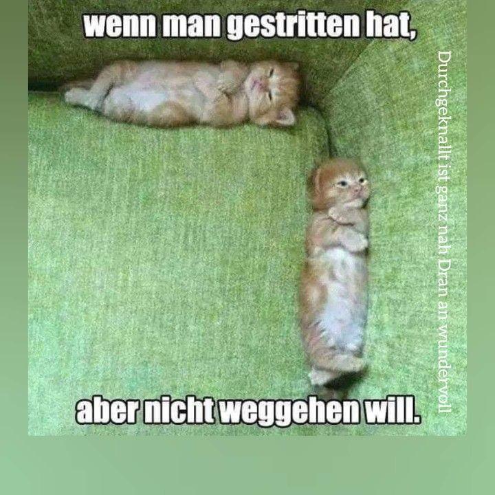 Pin Von Angellove Auf Lustige Spruche Lustige Bilder Von Tieren