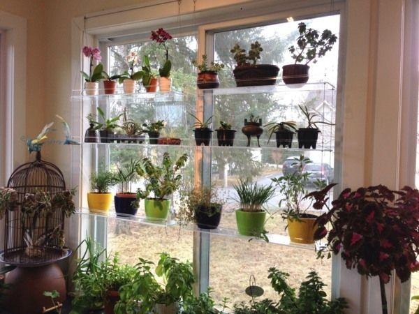 décoration intérieure avec des plantes vertes