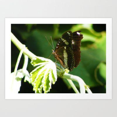Butterfly 7 Art Print by Sheridan van Aken - $20.80