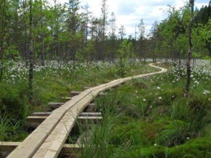 Kurjenrahka National Park. Photo: Metsähallitus/Hanna Ylitalo