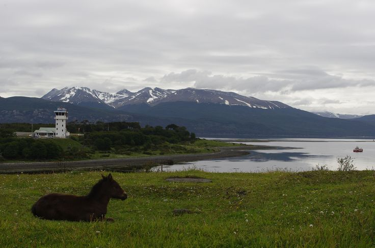 "#Chile ~ Puerto Williams Chile  Puerto Williams (Spanish for ""Port Williams"") is a Chilean city, located on Isla Navarino facing the Beagle Channel."