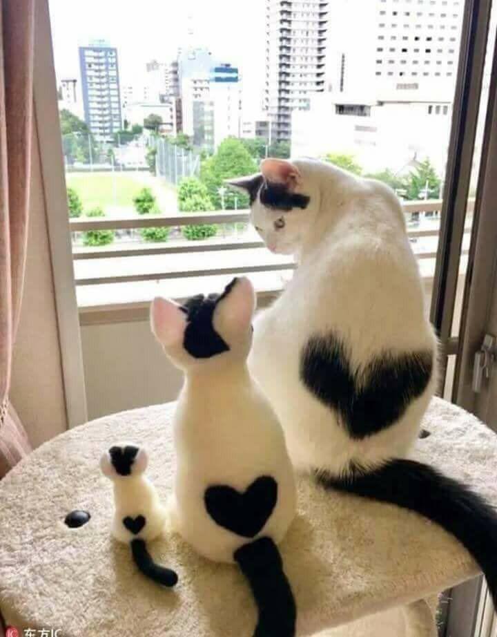 Acho que só o gato maior é de verdade os outros são de brinquedo mais ficou muito fofa essa foto – Gelines – GelinesGD