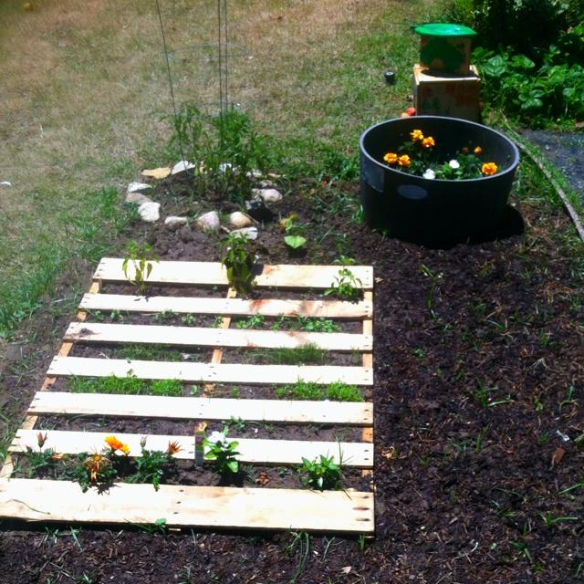 preschool garden ideas 16 best images about preschool vegetable garden on 755