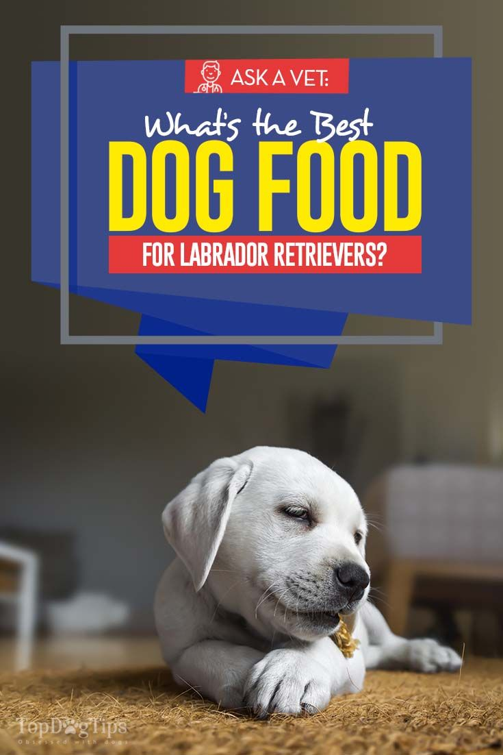 7 Best Dog Foods For Labrador Retrievers Best Dog Food Best