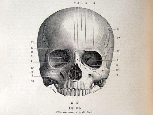 Medical Diagram Of Skull - Block And Schematic Diagrams •