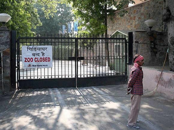 National Zoological Park shuts down temporarily amid bird flu scare in New Delhi