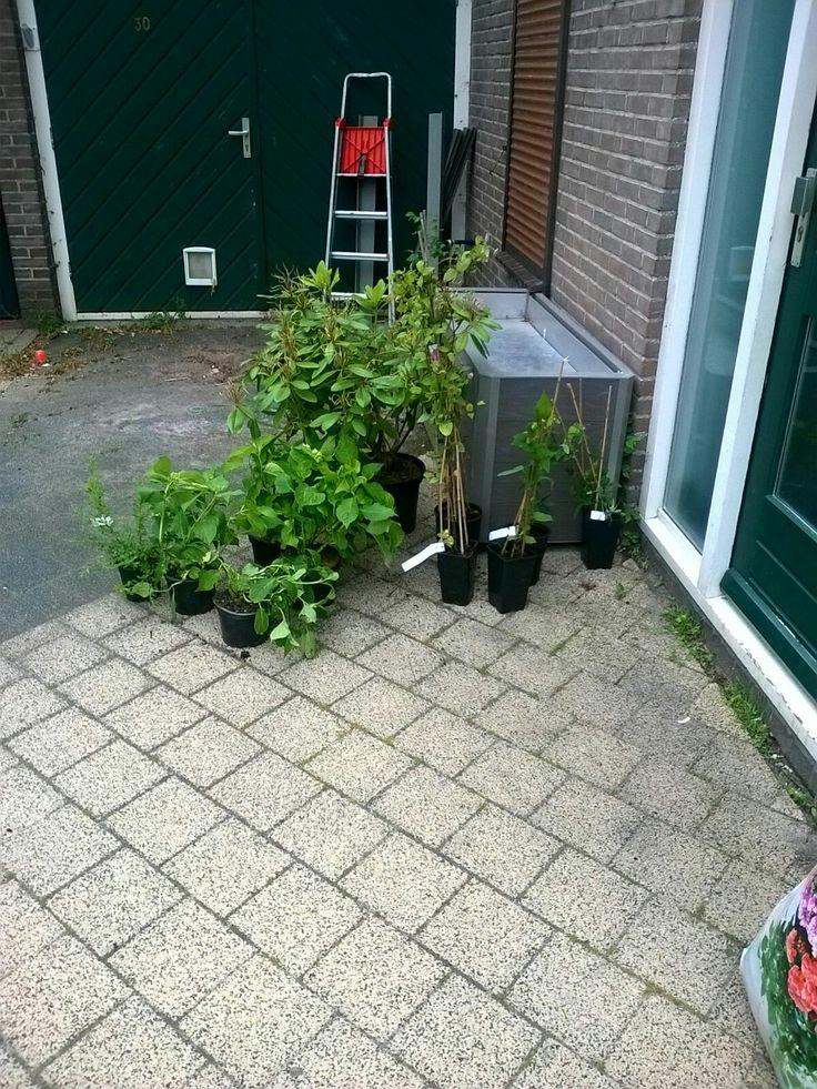 Andere plantjes zijn binnen bomen komen over 2 weken
