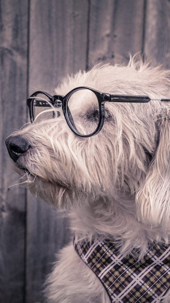 Dog Glasses Scarf Wallpaper Background Iphone Backgrounds Cool Dog With Glasses Dog Wallpaper Cute Dog Wallpaper Awesome cute dog wallpaper for iphone 6