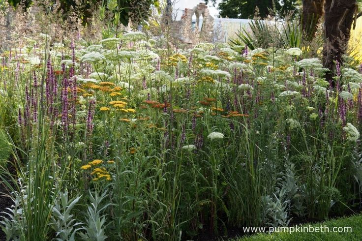 A close up of the planting in The World Vision Garden.  This area of the garden featured flowers attractive to bees, butterflies and other pollinating insects, and provided a contrast to the adjoining triangular sections of the garden.