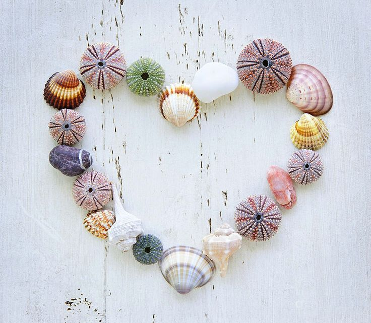 Heart of Seashells ❥