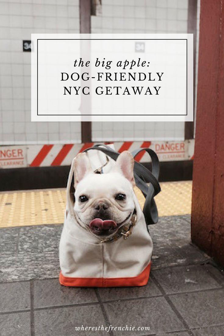 NYC Dog Friendly Getaway | Dog Travel | Dog friends, York dog, Pet