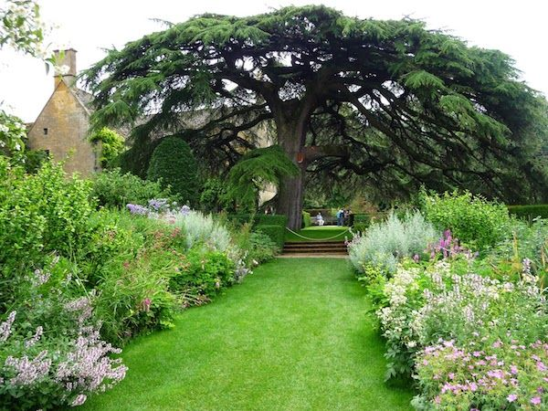 17 Best Images About Trees On Pinterest Trees Prunus And Olive Tree