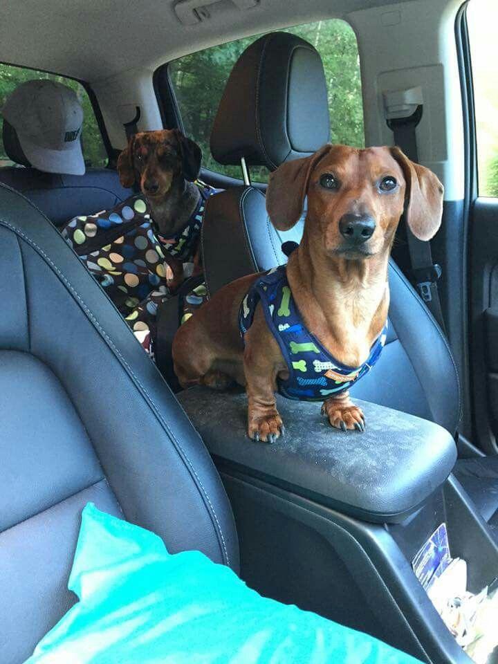 Best 25 Dog Car Seat Belt Ideas Only On Pinterest