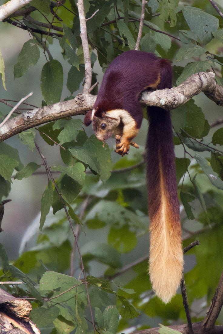 206 best squirrels images on Pinterest