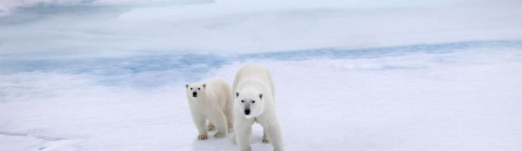 Come with us to the North Pole. When we reach 1 million signatures we'll plant your name and a Flag for the Future on the bottom of the ocean at the top of the world.
