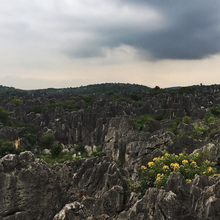 The Stone Forest an hour's drive away from Kunming makes for a great day trip (and some great photos too!) Image by: @gongbaobeijing  Follow @the_chinaguide or tag #thechinaguide for a chance to be featured