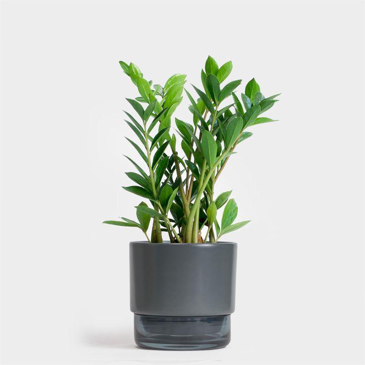 ZZ | Order Plants Online