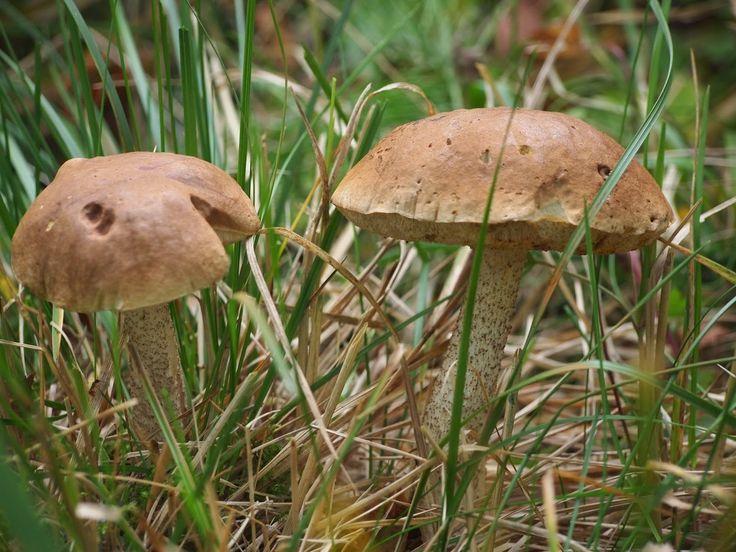 luonto kuvat ja kortit: syksy sieni