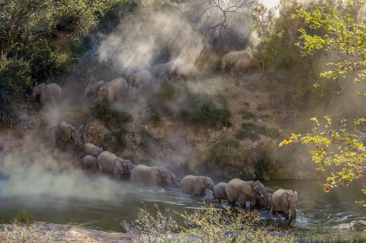 An incredible moment captured! Elephants crossing a river at Kwandwe Private Game Reserve in the Eastern Cape  Find Eastern Cape Game Reserve & Bush Lodge Accommodation https://goo.gl/GeX4B8    Africa Geographic @africageo