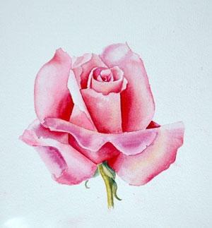 Watercolor Rose with Liz Miller, CDA