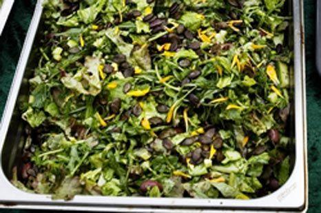 Grøn salat med krydderurter