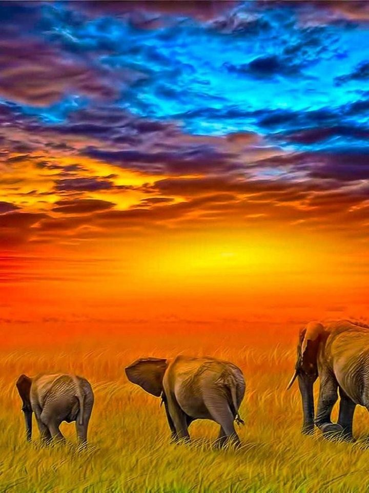 This is an amazing shot of elephants wondering off into the sunset in Kenya, Africa. The country has tons of wildlife and adventure that are perfect for any traveler. Make sure to put this country on your bucket list. (https://www.facebook.com/TravelingWarrior) #Kenya #Africa #nature