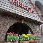 Terrapin Restaurant Tapas, Burgers, Salads, Drinks- Enjoy Rhinebeck