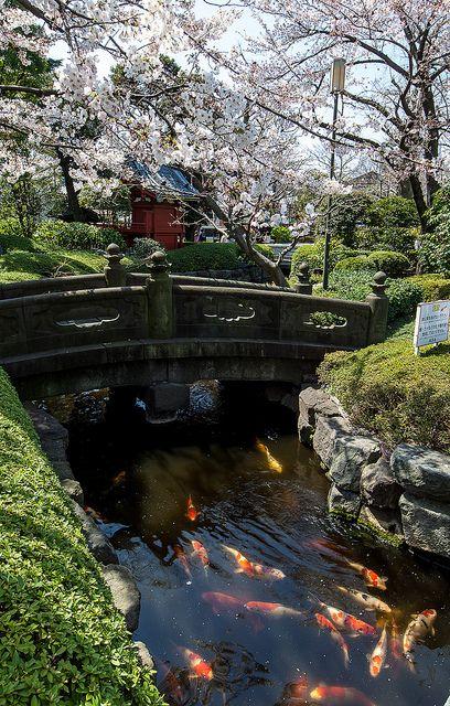 Asakusa 浅草, Tokyo, Japan... I wish Americans had an appreciation for the environment like the Japanese.