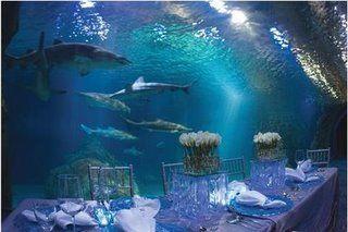 Adventure Aquarium, Camden NJ. NJ Aquarium Weddings